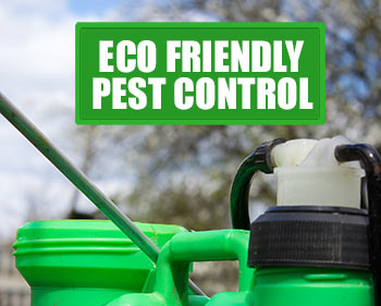 green-organic-pest-control-options